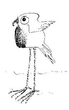 Doodle Bird sketch