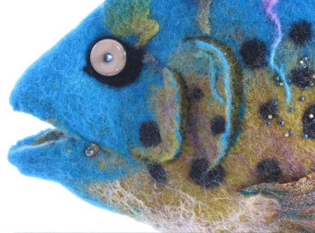 Dreamfish CU eye